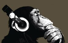 VIRGIN25 40*50 NOIR - CHIMP STEREO
